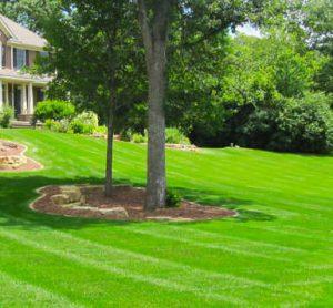 Professional Lawn mowing aurora