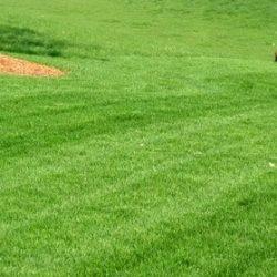 Aurora Lawn Mowing company